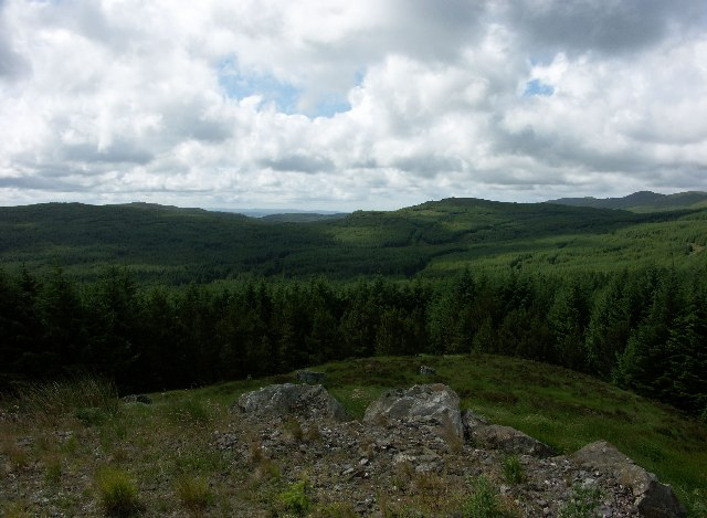 Forest in Knapdale area