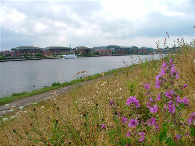 North Bank of the River Tees