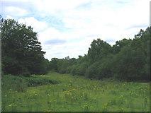 TQ5794 : Meadowland, South Weald Park, Sandpit Lane, Brentwood, Essex by John Winfield