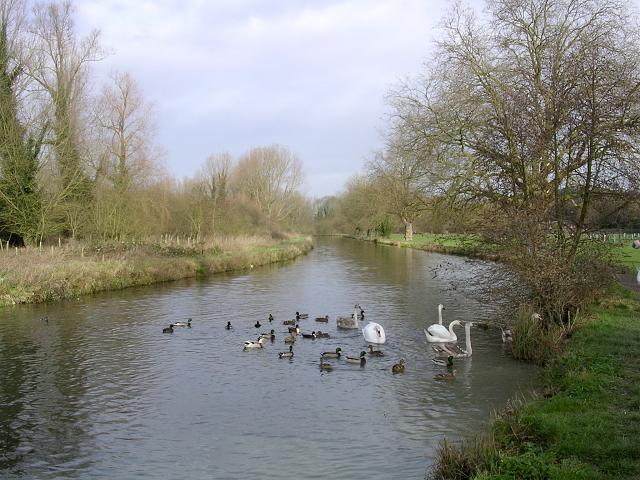 Feeding ducks and swans, the Itchen Navigation north of Tun Bridge, Winchester