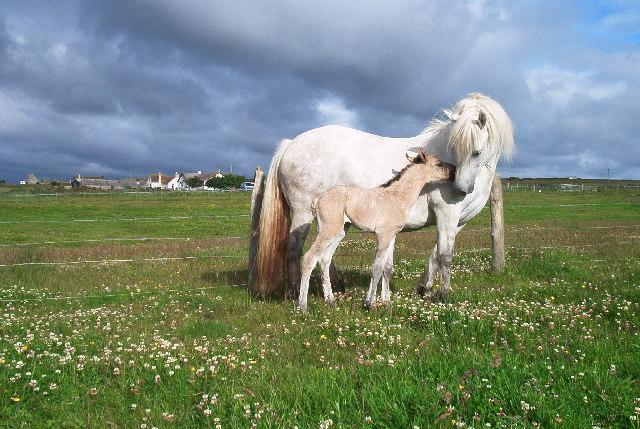 New-born foal.