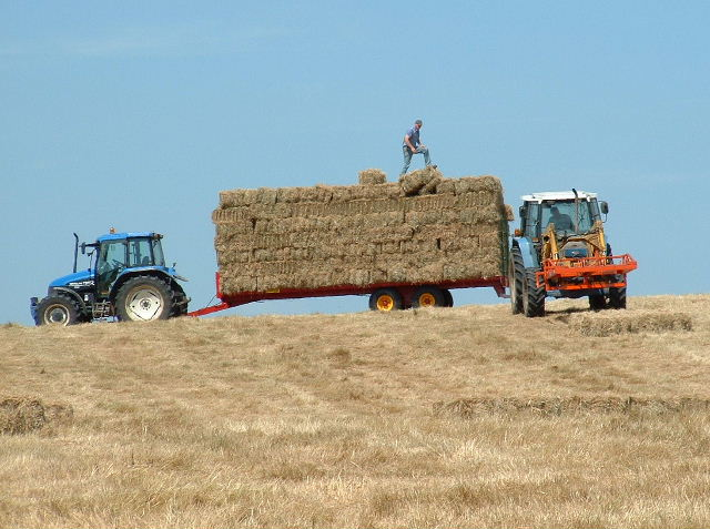 Angmering Hay Making