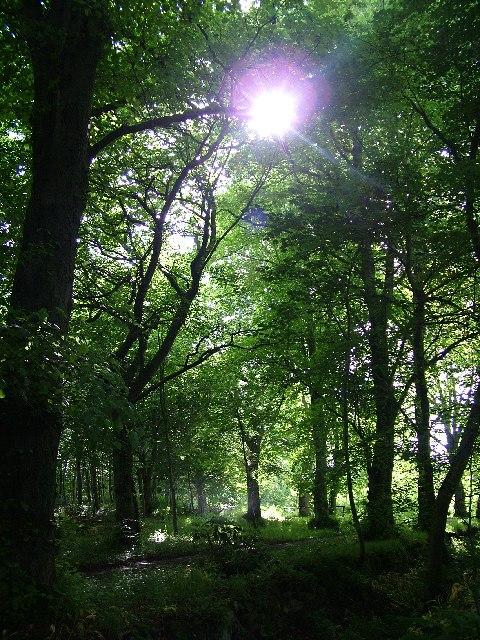 Woodland Walk at Pitmedden Gardens