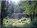 M1249 : Chapel on Inchagoill, Lough Corrib by Sheila Russell