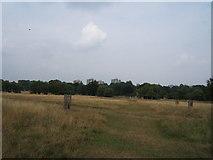 TQ2173 : Richmond Park near the Beverley Brook by Roger Miller
