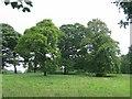 NT1166 : Parkland, Kirknewton by Richard Webb