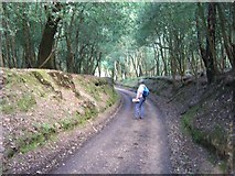 SU2609 : Sunken Lane approaching Acres Down House by Dave Jacobs