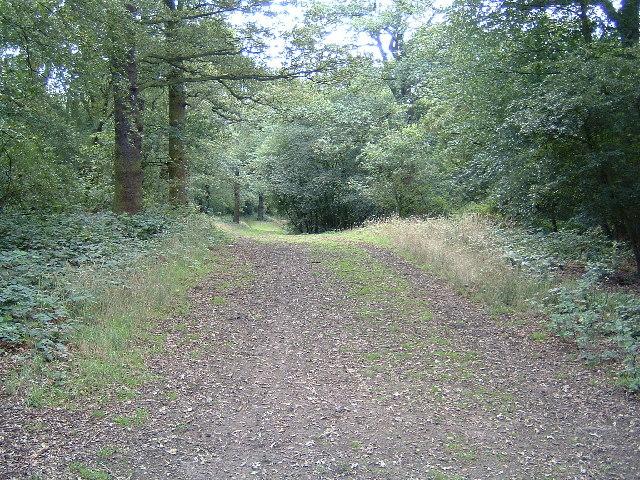 Towards Yardley Hill