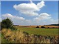 SU4673 : Farmland near Ogdown House, Chieveley by Pam Brophy