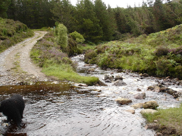 Ford on the Kernsary Forest track