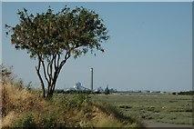 TQ8068 : Gillingham Riverside Country Park by Glen Diamond