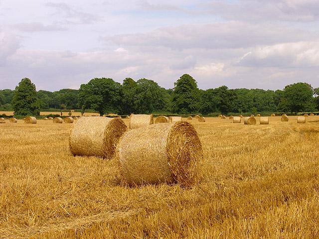 Farmland near Acton Turville