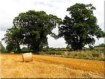 ST8180 : Field near Acton Turville by Pam Brophy