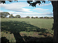 SJ3671 : Saughall Pasture by Dennis Turner