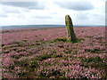 SE6096 : Boundary Stone, Bilsdale East Moor by Mick Garratt