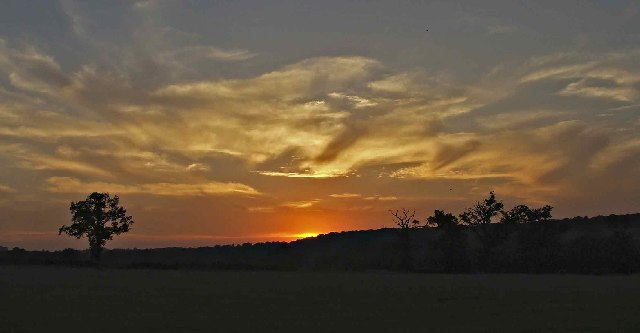 Lone Tree on Farmland off Enfield Road at Sunset by Christine Matthews