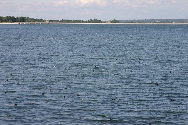 Hanningfield Reservoir