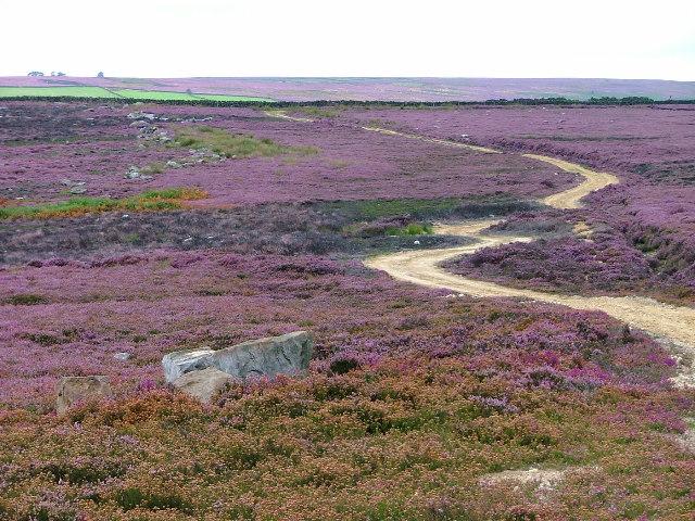 Track Across Laskill Pasture Moor