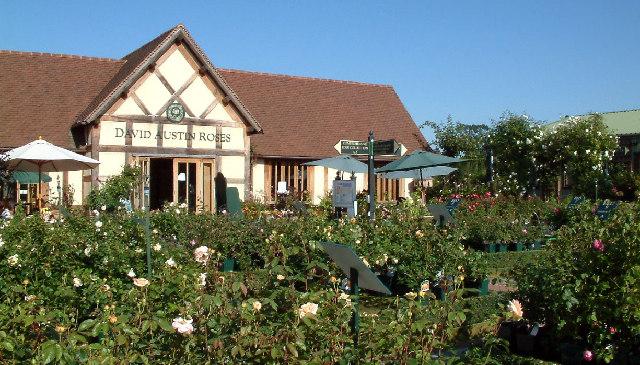 David Austin Roses Near Albrighton