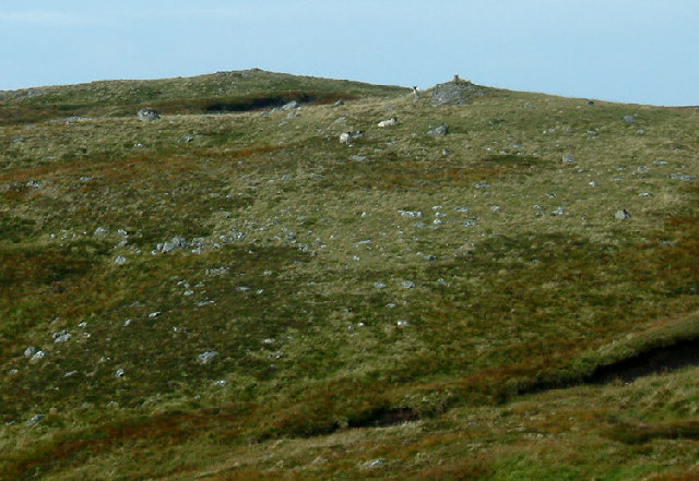 Sheep on the subsidiary summit of Meall na h-Eilde