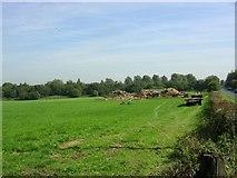 SJ6298 : Pastureland by Keith Williamson