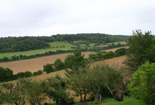 Sutton Hook Wood