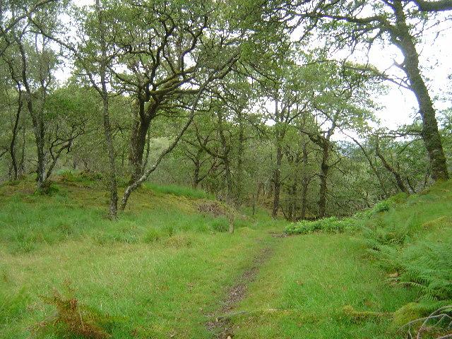 RSPB Reserve Glenborrodale