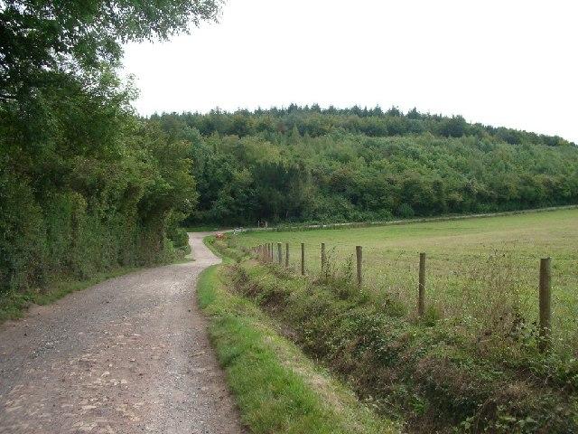 Bridleway on Fetcham Downs