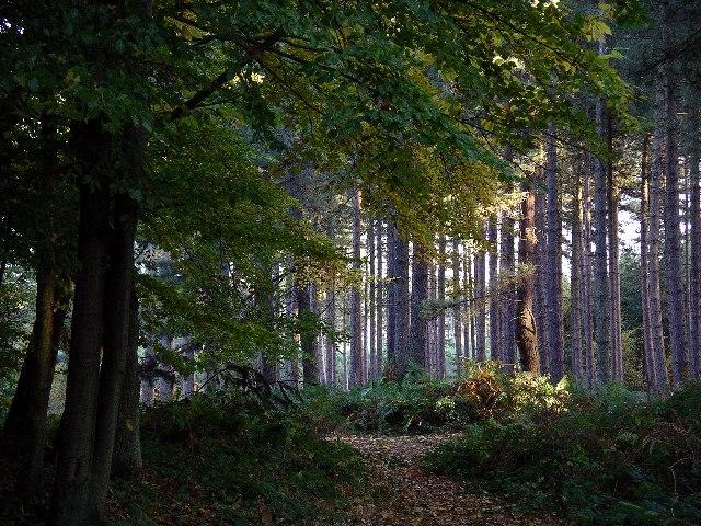 Sherwood Pines Forest Park, Notts.