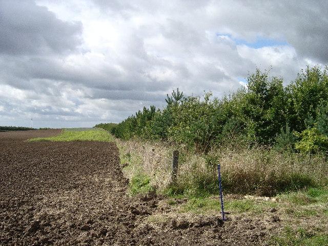 New woodland plantation