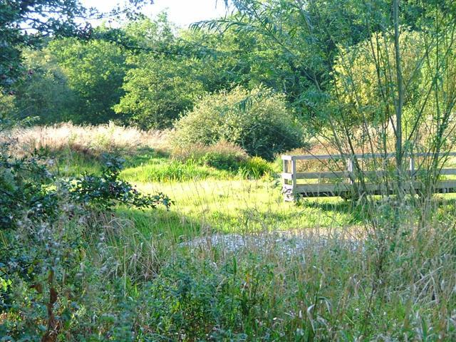School Aycliffe Wetland