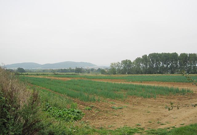 Fields near Conderton