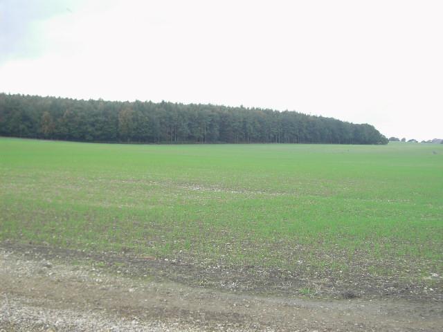 Dorrel Wood