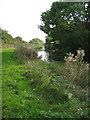SK8037 : Grantham Canal near Bottesford, Leicestershire by Kate Jewell