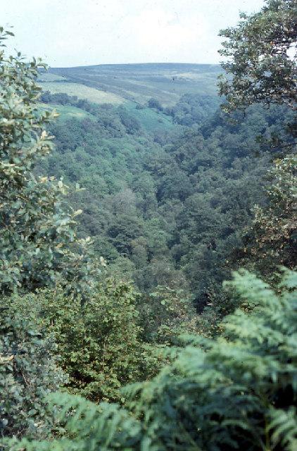 Banagher Glen Nature Reserve