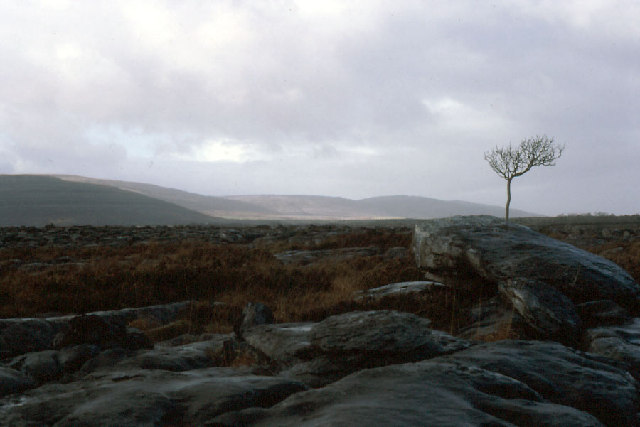 "An ash tree on the eastern fringe of The Burren: a much-photographed ""icon"""