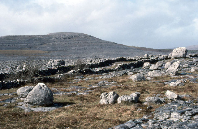 Rockforest, eastern Burren.