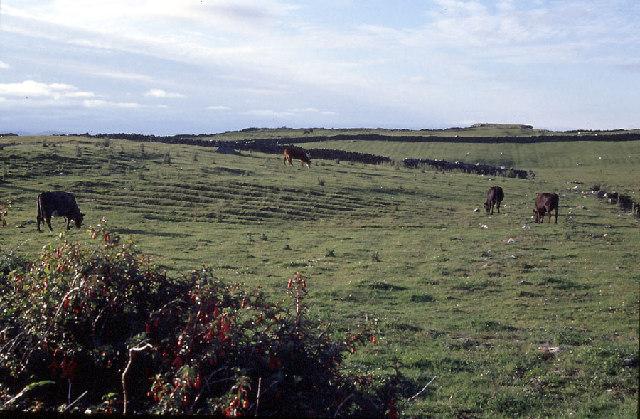Rough coastal grazing in Connemara