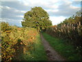 ST3657 : Bridleway on Bleadon Hill by Adrian and Janet Quantock