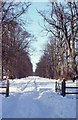 N9733 : The avenue of Castletown House, Celbridge. by Dr Charles Nelson