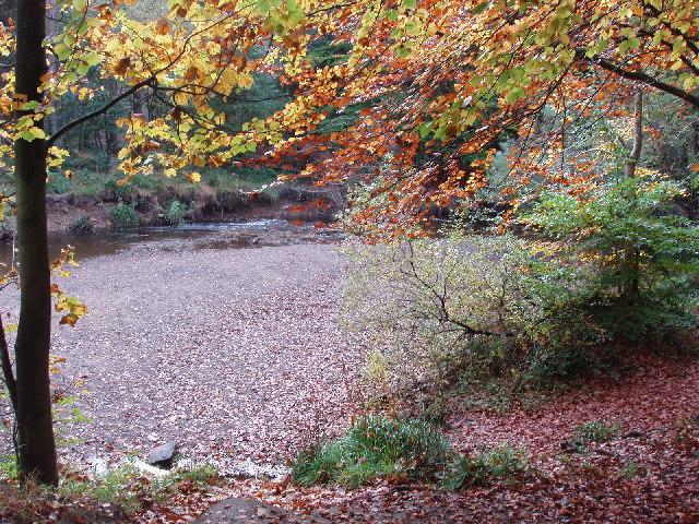 Bedburn Beck in autumn, Hamsterley Forest