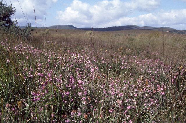 Moorland near Kilgobnet