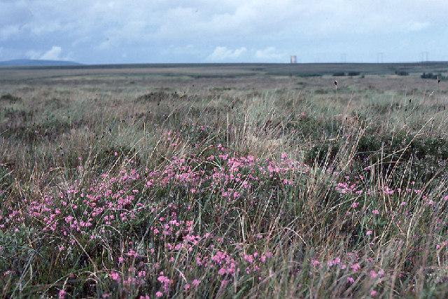 Moorland near Bellacorick, north Mayo.