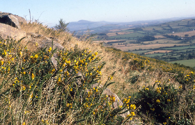 On Slievecoiltia, looking east