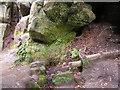 TQ5335 : Spring, Harrison Rocks by N Chadwick