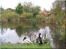 SU6349 : Cliddesden Village Pond by Simon and Alison Downham