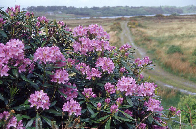 South side of Lough Caragh, near Killarney.