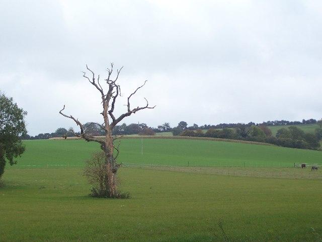 Dead tree in field past Lower Peake Cottage