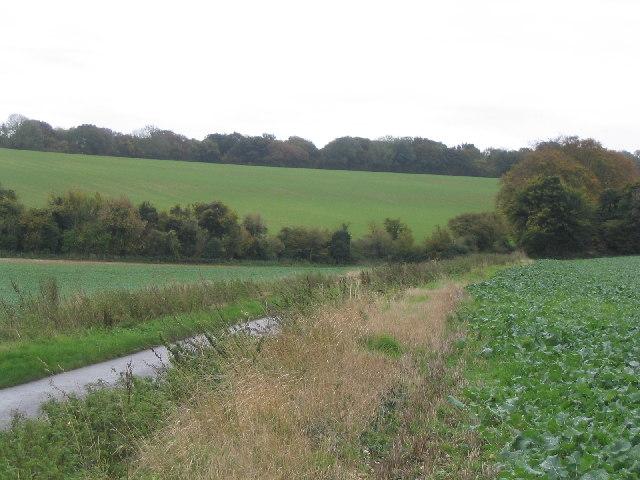 White Hill near Cliddesden