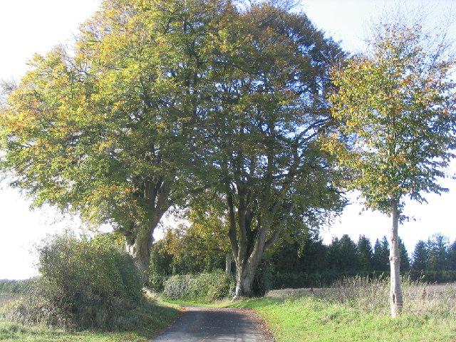Hook Lane